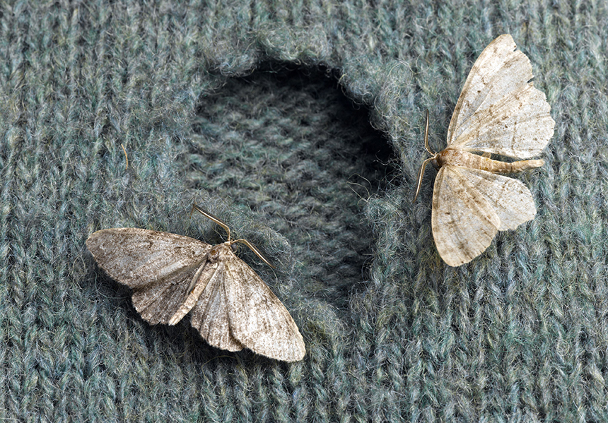 6 Amazing Moth Traps for Every Closet and Pantry