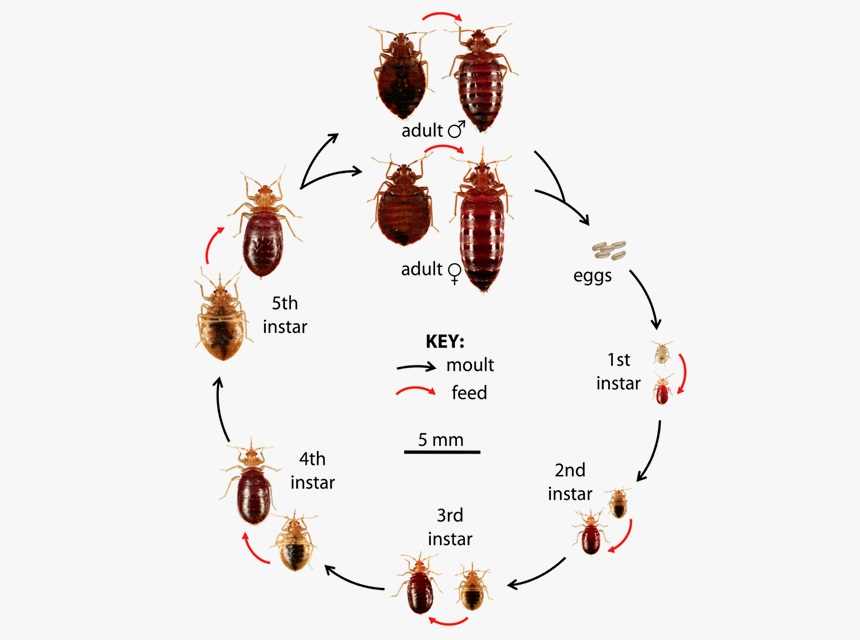 How Do Bed Bugs Spread from House to House? Here's What You Need to Know!