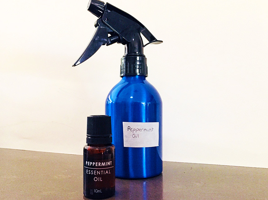 How to Use Peppermint Oil for Bed Bugs? Nature's Way to Repel Insects!